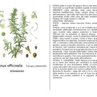 scheda botanica.pdf